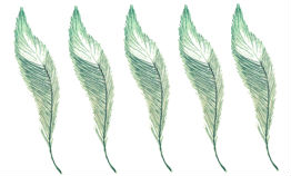 5-feathers