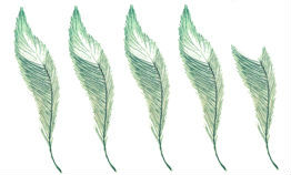 4_5 feather